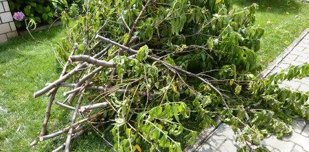 RAPIDO - drcení větví